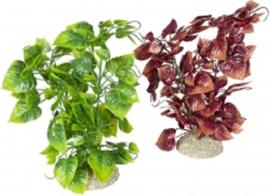 Plant anubias nana Gemengde kleuren L - height 25cm