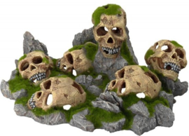 Aqua della skulls world groot