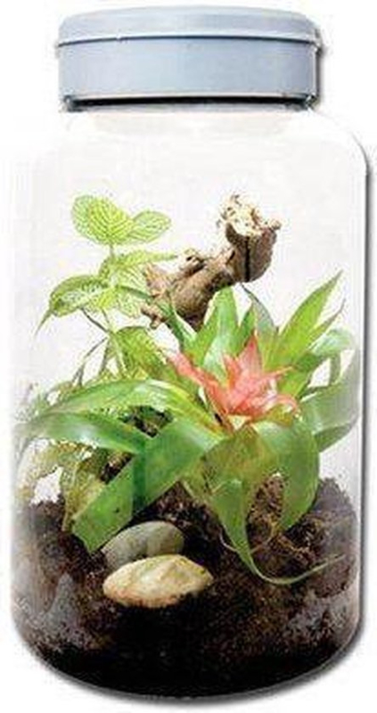 Lucky  Insect Tarrium 5L