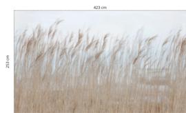 SWAYING REED - 423 x 253 cm