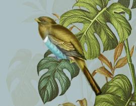 HIDDEN BIRDS (2 colors)