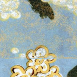 Elitis Soleil Levant MIROIRS DE L'AME (4 colors)