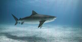 SHARK - 460x237 cm