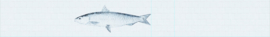 FISH - 464 x 64 cm