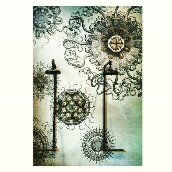 Wall & Deco MEDUSAE