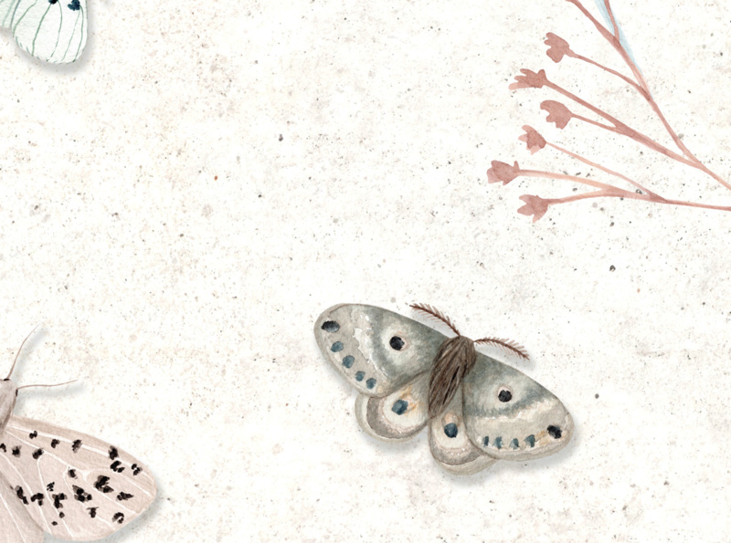 House of Gray BUTTERFLY EFFECT