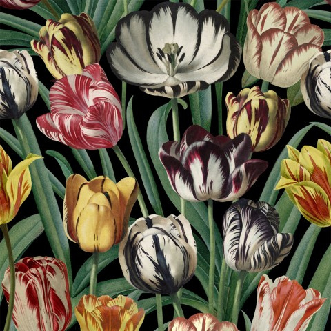 Mind The Gap TULIPA (2 kleuren)