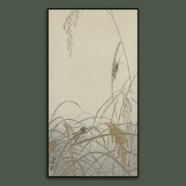 GRASSHOPPER  / OHARA KOSON