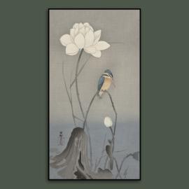 PARADISE BIRD  / OHARA KOSON
