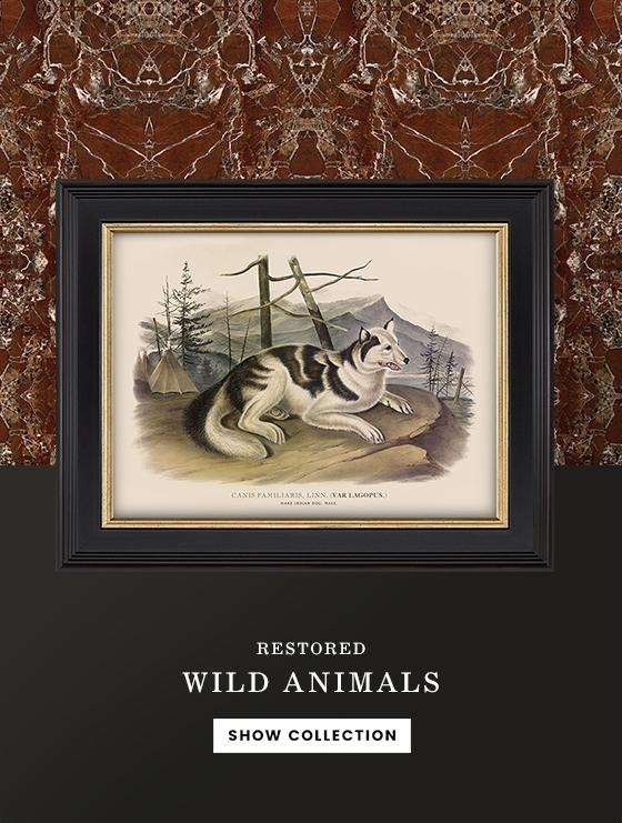 Wilde dieren prenten vintage antiek