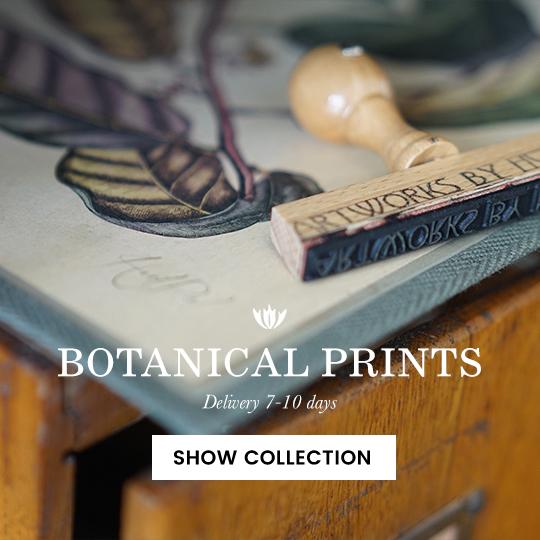 botanical fine art prints