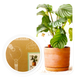 House of ThoL - Waterworks - Waterdruppel systeem voor  Blije Planten
