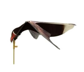 Sillosocks Pink Foot Grey Lag Goose Hypaflaps Grauwe Gans / Greylag Instrijkend | Landend