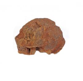 Olijfboom Kauwwortel 500-750 gr