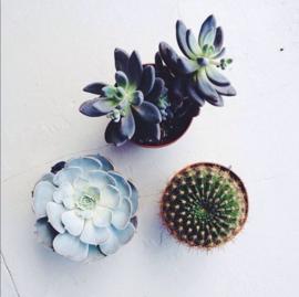 houten photoblock cactus