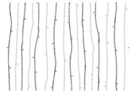 Papieren zakjes Black/White Tree