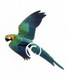 Papegaai - stans decoratie - 7.5x5.5 cm