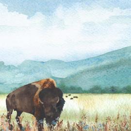 Buffalo's/Bisons links & rechts - 30.5x30.5 cm - dubbelzijdig scrapbookpapier