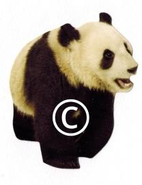 Pandabeer - stans decoratie - 5.5x7 cm