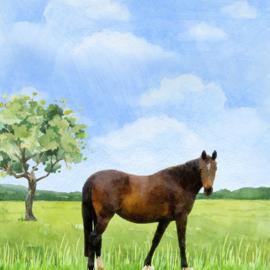 Scrapbook papier Paarden