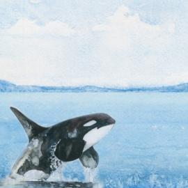 Orca -  watercolor - 30.5x30.5 cm - dubbelzijdig scrapbookpapier