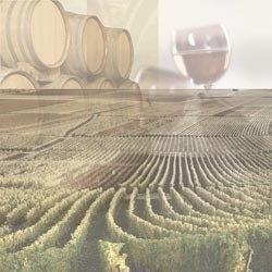 Wine country/wijngaarden papier 30.5 x 30.5 cm