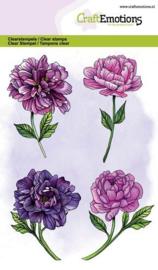 Pioenrozen - bloemen - A6 stempels
