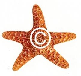 Zeester - stans decoratie      7.5x7.5 cm