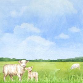 Schaap / sheep -  watercolor - 30.5x30.5 cm - scrapbookpapier