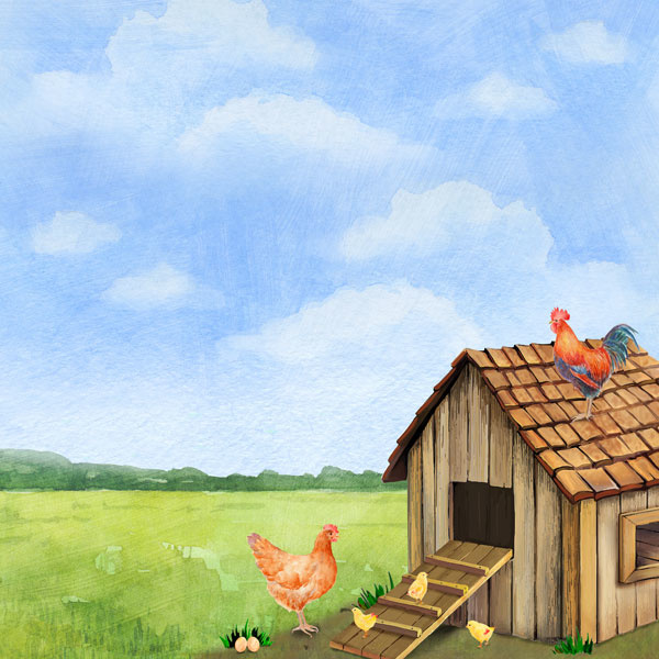 Chicken / kippen - watercolor - 30.5x30.5 cm - scrapbookpapier