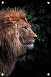 Leeuw zijaanzicht
