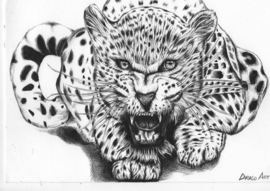 Cheeta - A4