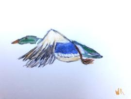 Vliegende Eend. Wilma R.