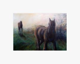 Twee paarden in de ochtend