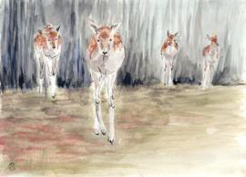 Herten uit het bos