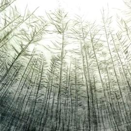 Winter in het woud