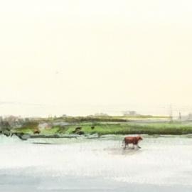 Jonge koe aan de oever.