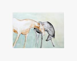 Terschellinger paarden