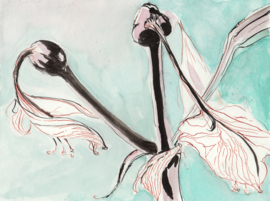 Amarylis na de bloei