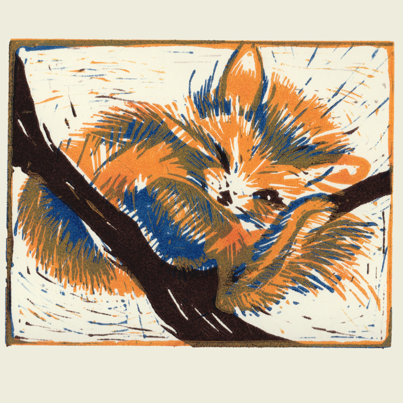 Rode Panda  (goudgeel/blauw)