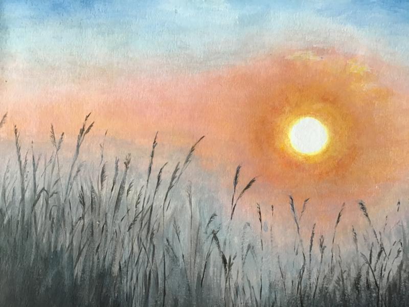 Opkomende zon achter het riet Marjan