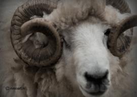 Kaart Blonde Ram