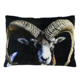Kussen Fluweel Ram