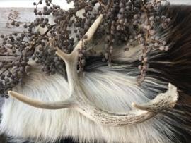 Hertengewei White Tail Deer 3
