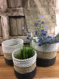 Zeegras planten mand Triocolore S