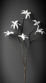 Zijdebloem wit