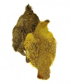 Partridge Skin (Patrijs) - geverfd
