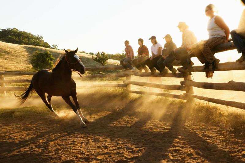 Jackaroo & Jillaroo School 5 dagen Outback Experience