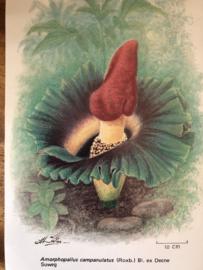 Ansichtkaart exotische bloem