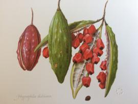 "Dubbele kaart ""Fruits of the Australian Forest"" | Royal Botanic Gardens Sidney| 2002"